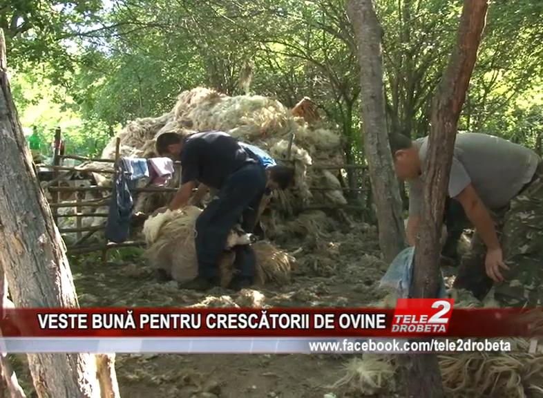 VESTE BUNĂ PENTRU CRESCĂTORII DE OVINE