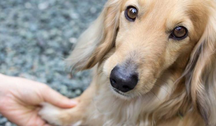 Câinele-cel mai bun prieten al omului