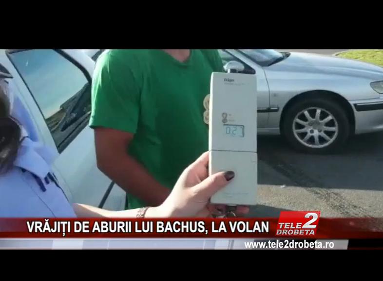 VRĂJIȚI DE ABURII LUI BACHUS, LA VOLAN