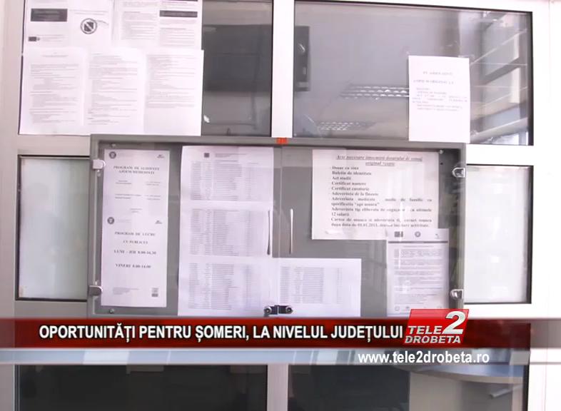 OPORTUNITĂȚI PENTRU ȘOMERI, LA NIVELUL JUDEȚULUI