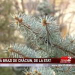 FĂRĂ BRAZI DE CRĂCIUN, DE LA STAT