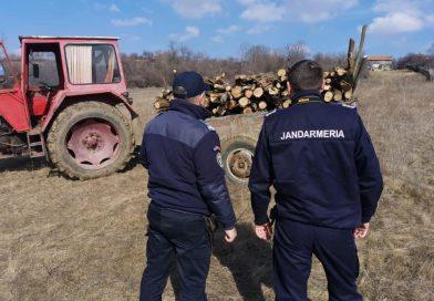 Prins de jandarmi în timp ce fura şase metri cubi de lemne